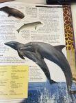 Bilduppslag på en delfin